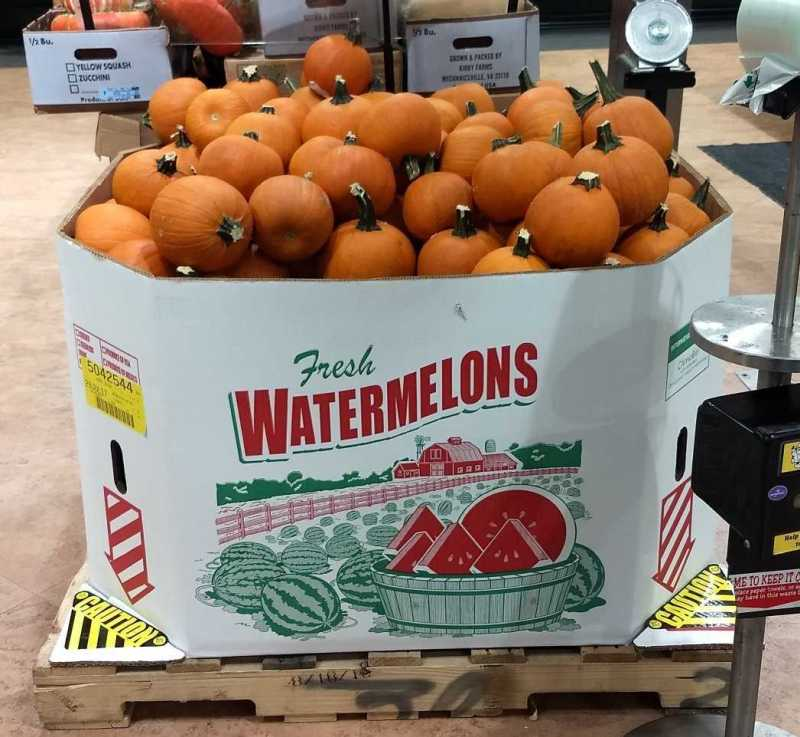 images/gallery/sightgags/PumpkinWatermelons.jpg